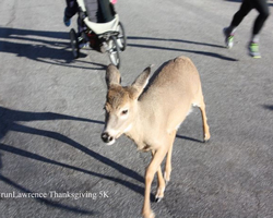 A very unshy deer ran among the runners showne here at the finish area.